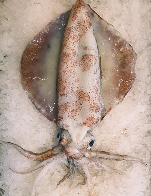 Local-Calamari-(Fresh)-Aptus-Seafood